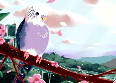 Spring Budgie