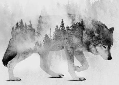 Wolf and Forest 6