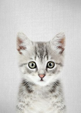 Kitten Colorful