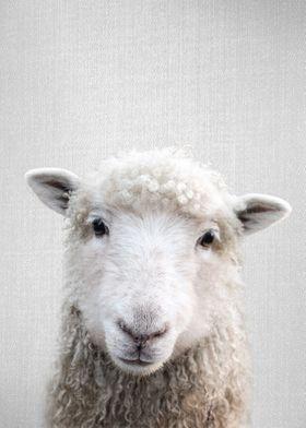 Sheep Colorful