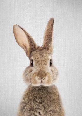 Rabbit Colorful