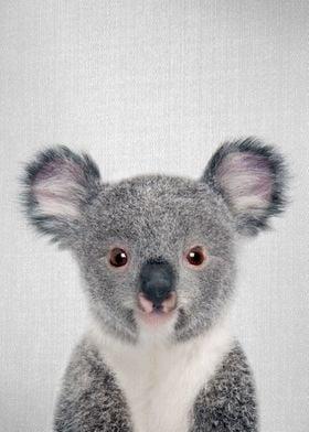 Baby Koala Colorful