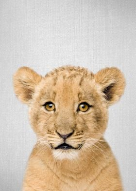 Baby Lion Colorful
