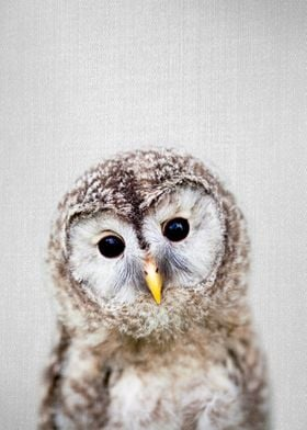 Baby Owl Colorful