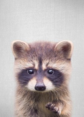 Raccoon Colorful