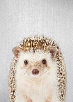 Hedgehog Colorful