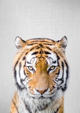 Tiger Colorful
