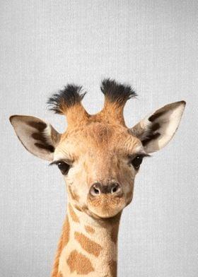 Baby Giraffe Colorful