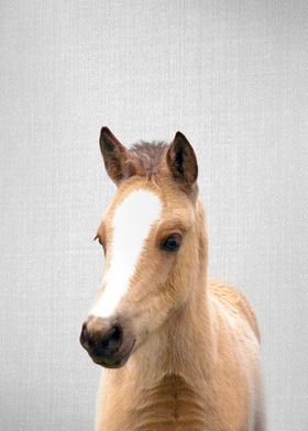 Baby Horse Colorful