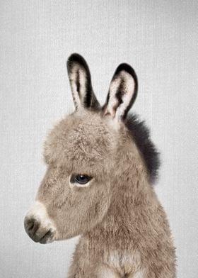 Donkey Colorful