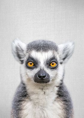Lemur Colorful