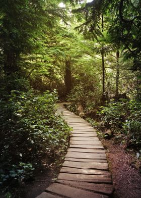 trail to Cape Flattery