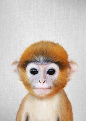Baby Monkey Colorful
