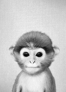 Baby Monkey BW