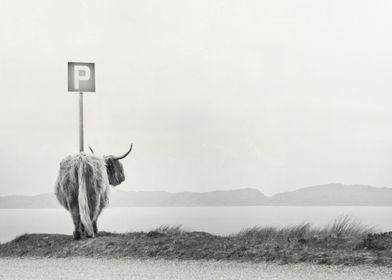 highland visitor