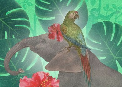 Parrot and Pachyderm