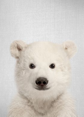 Baby Polar Bear Colorful