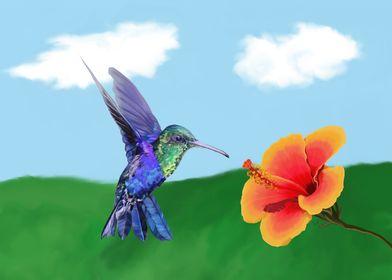 A very hungry hummingbird