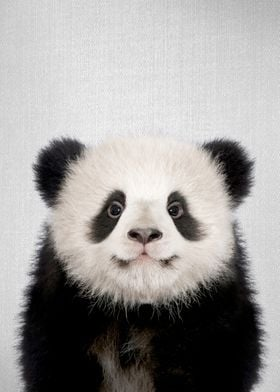 Baby Panda Bear Colorful
