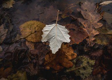 Autumn Wonderland I