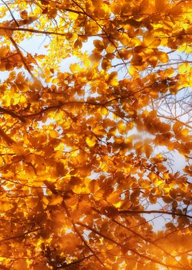 Autumn Wonderland II