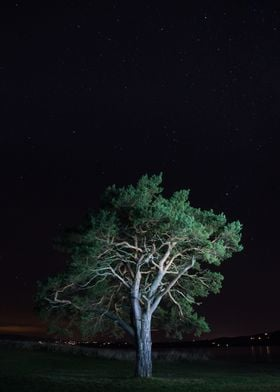 Tree in the night