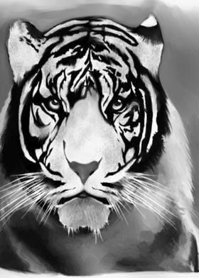 T The Tiger
