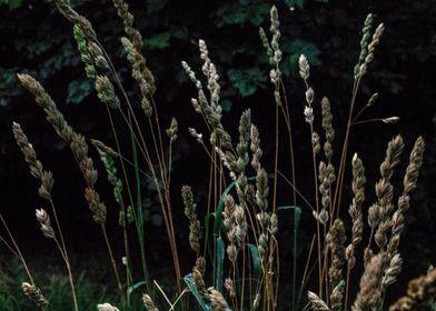 The Grasses