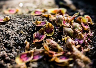 The Trail of Petals