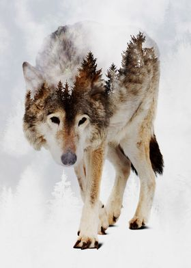 Wolf and Forest 7