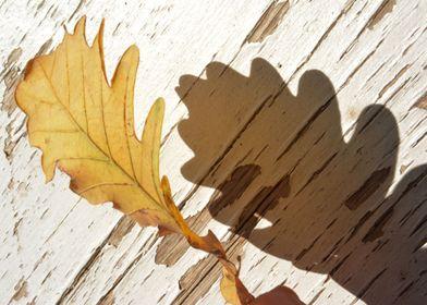 Leaf and Shade
