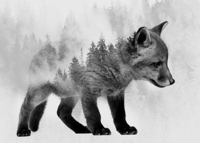 Baby Fox 2
