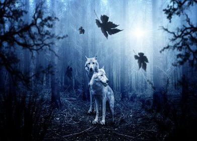 Wolves at aurora