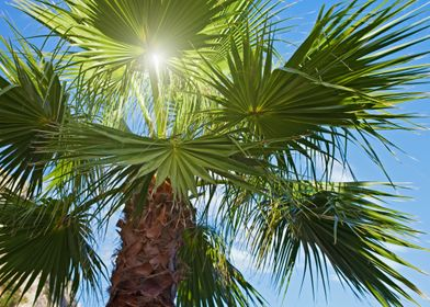 Sun rays through the palm