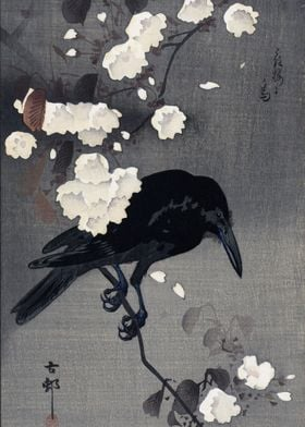 Crow with cherry blossoms