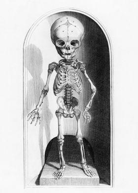 Medieval Anatomy of Child