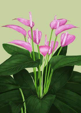 Tropical flower anthurium