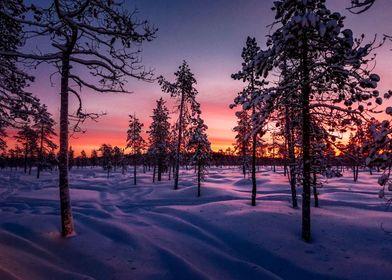Winter Laponie
