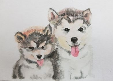 Cute husky painting