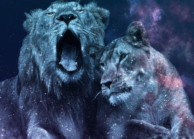 Lions Couple Galaxy