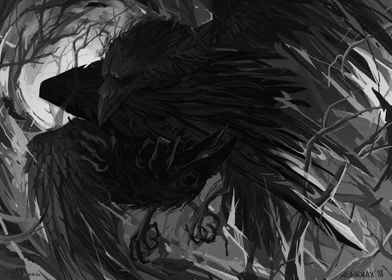 Raven fight