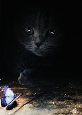 Cat and blue butterfly