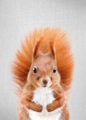 Squirrel 2 Colorful