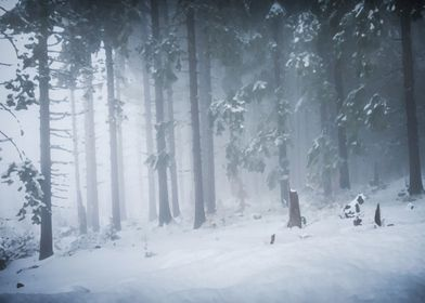 Snow forest in fog