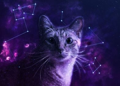 Cute Galaxy Cat