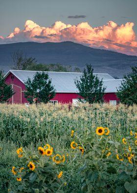 Kelowna Farm