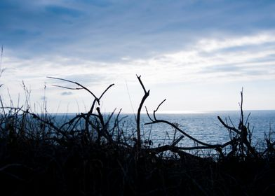 plant sea sky
