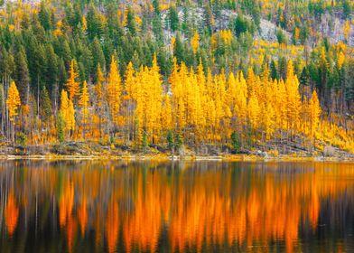 Chute lake BC