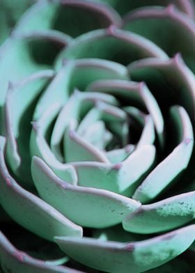 DARKSIDE OF SUCCULENTS-3A