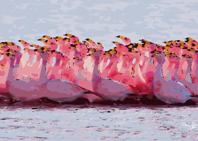 Flamingo Flock In Bay